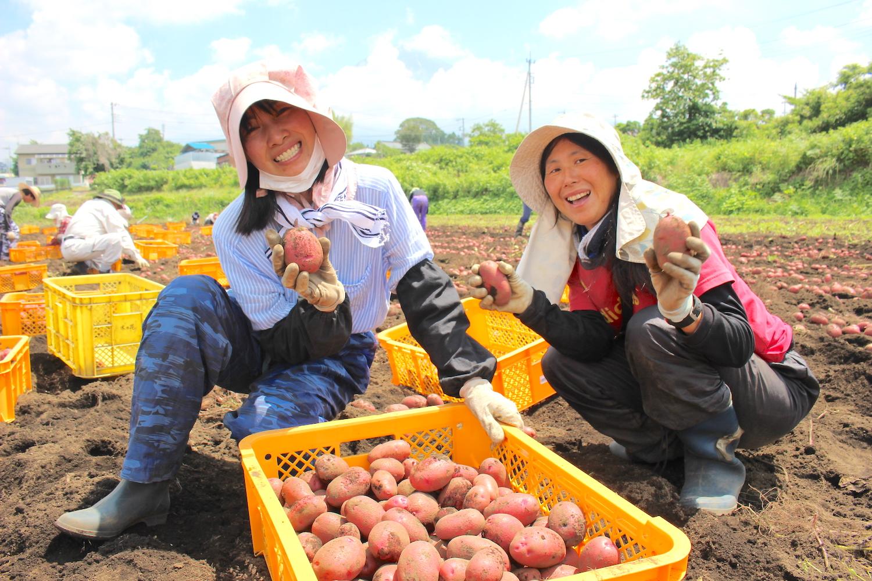 天然循環法の美味しい玉ねぎと、ジャガイモも大特価!!
